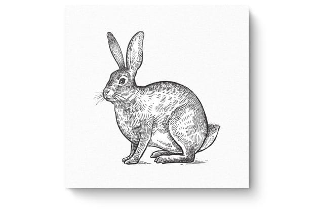Tierzeichnung3